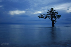 blue calm (anthonyserafin) Tags: blue light sea tree point lowlight davao worldbest colorphotoaward bluecalm worldtrekker canon5dmk2 mindigtopponalwaysontop anthonyserafin