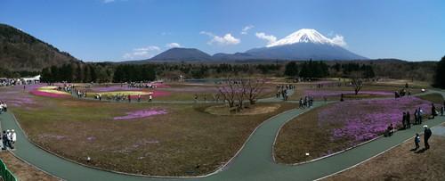 富士芝桜まつり会場パノラマ。