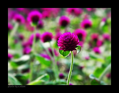 charming #2 (e.nhan) Tags: flowers light flower art nature closeup colorful colours dof bokeh arts backlighting enhan