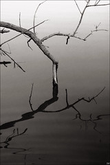 (DillonH) Tags: winter lake abstract tree water reflections branch fineart ripples curved fallentree treelimbs 1855mmkitlens reflectionsinwater lakewylie desaturatedcolors nikond40