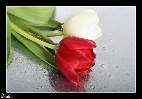 اللى يدخل ياخد وردة يهديها لحد 2414600722_469bfc8761