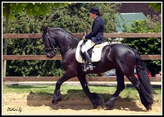 Sweet Heart (Didier-Lg) Tags: show horses cheval rider horseriding chevaux dressage frison equitation galope fresian chavaux horsesandriders chevauxetcavaliers