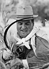 Mietitura (Topyti) Tags: sardegna bw 35mm sardinia wheat olympus scanned rodinal zuiko biancoenero turri grano harvesting om4ti falce plustek sagradellamietitura eventidafotografare