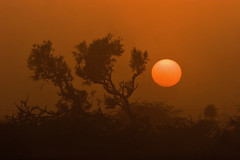 Feeling Melancholic (Max Loxton) Tags: trees pakistan sunset sun asia desert pakistani dust pinkish lastlight cholistan saarc yasirnisar towardspakistan pakistaniphotographer maxloxton