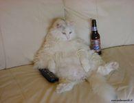 חתול עצלול