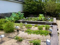 Himeji - Koko-en garden