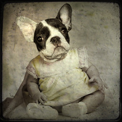 Please, love me... (Martine Roch) Tags: dog baby animal puppy square bostonterrier surreal bulldog photomontage pup doggie digitalcollage ttv petitechose martineroch bouledogfrancais
