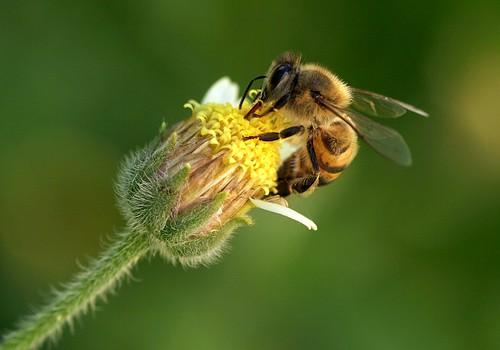 Em busca do néctar II