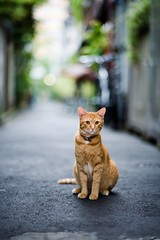 cat # 087 (alleys) Tags: animals zeiss cat canon 85mm 5d planar 8514 thecatwhoturnedonandoff