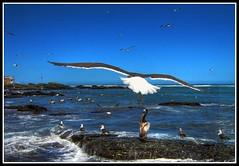 Mar Alado (Errlucho) Tags: