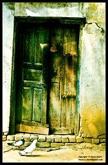 The door . (A wandering hermit) Tags: door india photography naval pegions bhatt colourartaward