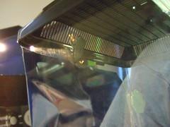DSCF4009 (Frog Style) Tags: temp new red tree eye babies tank idaho boise frogs addition boiseidaho redeyetreefrogs temptank