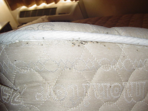 Bed Bugs Evidence In Hotels Including Fecal Stains