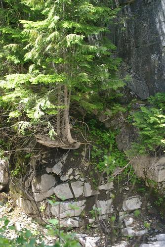 2008-07-31 Mt Ranier (5)