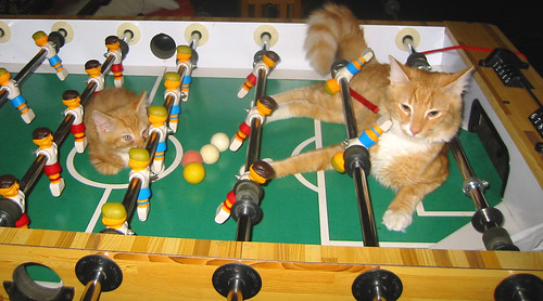 20080827 - new kitten - 165-6534 - Lemonjello, Oranjello - foosball - goalie Oranjello