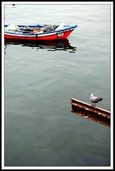 (@maurourrutia) Tags: mar agua ave 480 gaviota oceano xvirousx xvirousxgmailcom maurourutia