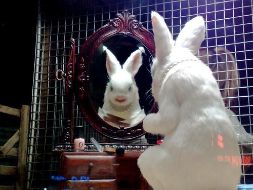 Vain bunny