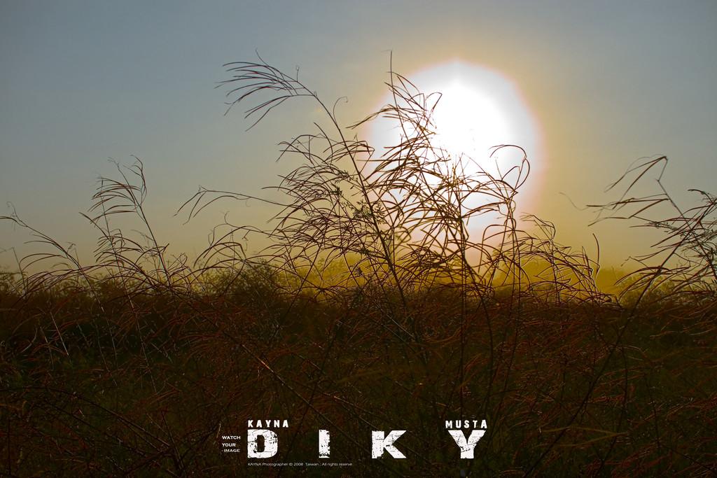 『D.I.K.Y 』