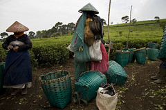 Tea Plantation Workers (henri ismail) Tags: indonesia workers westjava teaplantation