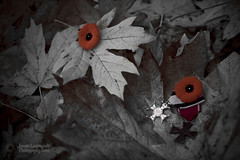 November time for remembrance (janusz l) Tags: bravo war day order cross maki honor crosses images poppy poppies remembranceday orders veterans veteransday lestweforget vets valor november11 janusz leszczynski 4703 yeswecan infinestyle virtutimilitari