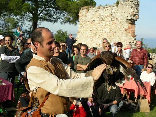 El Falcó menja de la mà del falconer