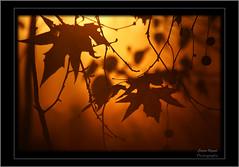 poplar (Cesare Vigan) Tags: autumn dog fog canon cowboy shadows milano photograph 5d hunter viga contrasts itsmylife bussero cesarevigano cesarevigan httpwwwflorekanet