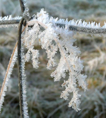 Frost by River Ayr 29Nov08