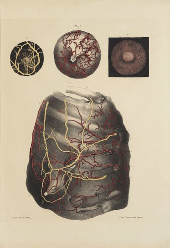 Arteries and Veins a (Cooper, 1840)