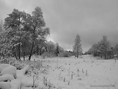 Fresh snow (jungl thomas) Tags: trees winter sky blackandwhite bw white snow black norway clouds nesodden akerhus fjellstrand ellingstad
