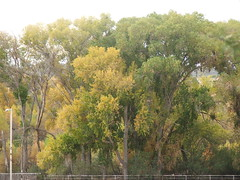 Fall Colors in Wickenburg, AZ