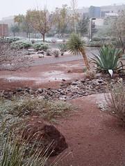 UNLV (Kekkon) Tags: snow lasvegas unlv winterstorm