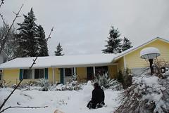 Embracing the snow (Alive and Kikin) Tags: white snow erez redmondsnow 2008december