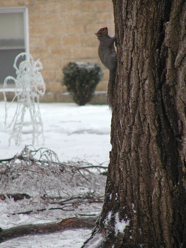 icestorm12-19-08squirrel