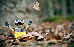 Happy Wall-E! (Giulia Torra) Tags: autumn colour foglie canon 350d colore leafs walle vignettatura
