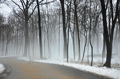 comes the fog (christiaan_25) Tags: road trees winter white snow black fog forest woods explore 500views 600views 700views mortonarboretum fogandrain fbdg theinspirationtree natureandnothingelse aspiretoinspire nikond90club essavalepormilpalavras reallycoolphotos nikonspecial