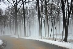 comes the fog (christiaan_25) Tags: road trees winter white snow black fog forest woods day explore 500views 600views 700views mortonarboretum fogandrain fbdg theinspirationtree natureandnothingelse aspiretoinspire nikond90club essavalepormilpalavras reallycoolphotos nikonspecial