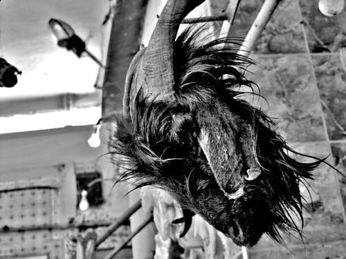 goat's head