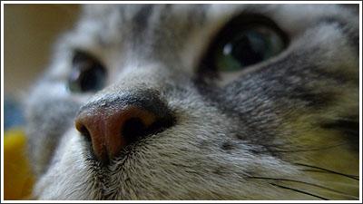 猫の写真をFlickrのスライドショーに