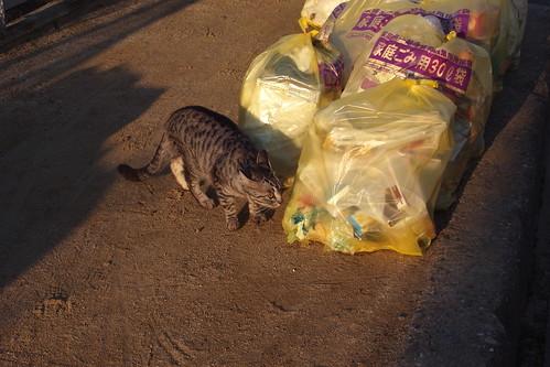 Today's Cat@20091015