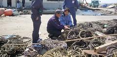 石巻再訪:貝殻を結びつけるロープも回収されている