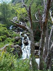 Ruisseau en montagne