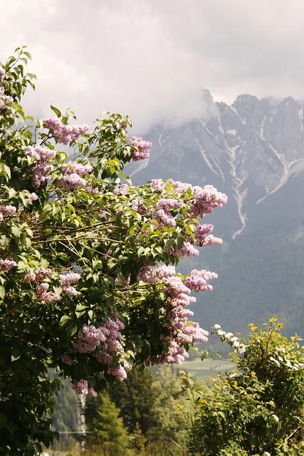 -1- alpenhotel monte rota