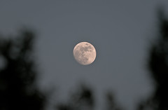 Moon Rise - June 13 2011 (mjkjr) Tags: trees moon night ga georgia nikon dof atl fullmoon 300mm moonrise astronomy nikkor lunar newnan waxinggibbous moonphases telephotolens naturalframing cowetacounty 2011 d90 30265 nikond90 70300mmvr earthssatellite 70300mmf4556gedifafsvr mjkjr httpwwwflickrcomphotosmjkjr june132011 96illuminatedmoon