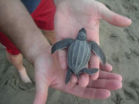 turtle_james