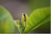 Windy Ant (Shabbir Ferdous) Tags: macro leaf photographer ant bangladeshi golddragon canoneosrebelxti shabbirferdous sigmazoomtelephoto70300mmf456apodgmacro wwwshabbirferdouscom shabbirferdouscom