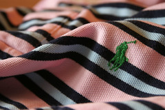GreenHorse (Daniel Jardine) Tags: pink blue horse usa lauren slr sport canon project photography eos good best clothes cotton 10d material polo ralph stripy collor