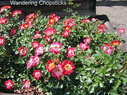 Miniature roses 2347851198_63e142456