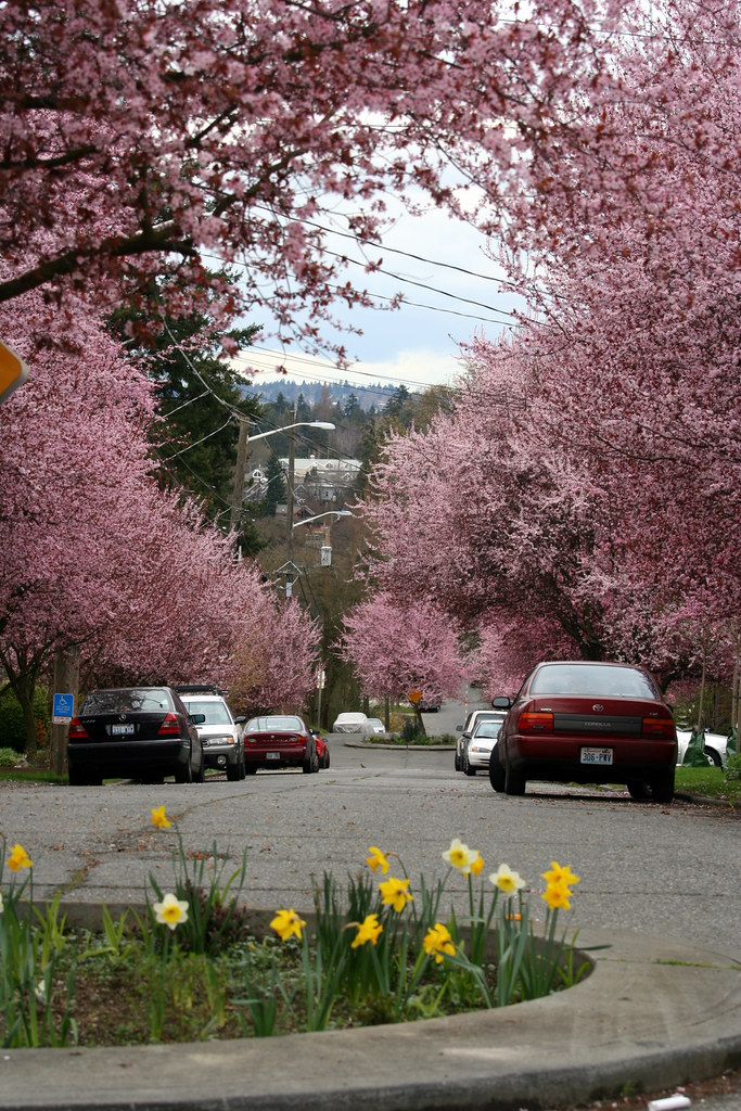 Spring Streetscape