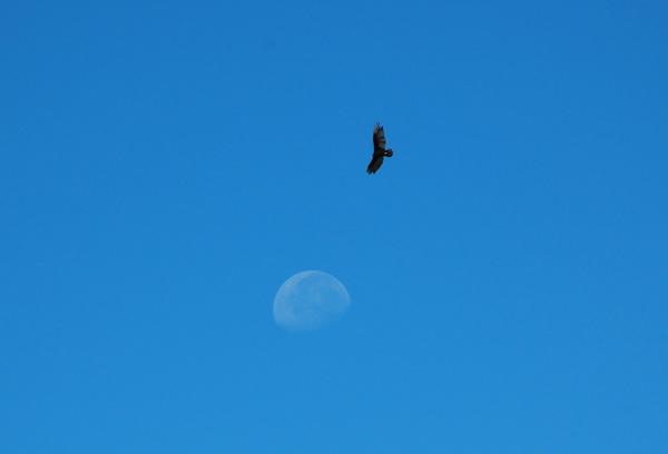 moon0053