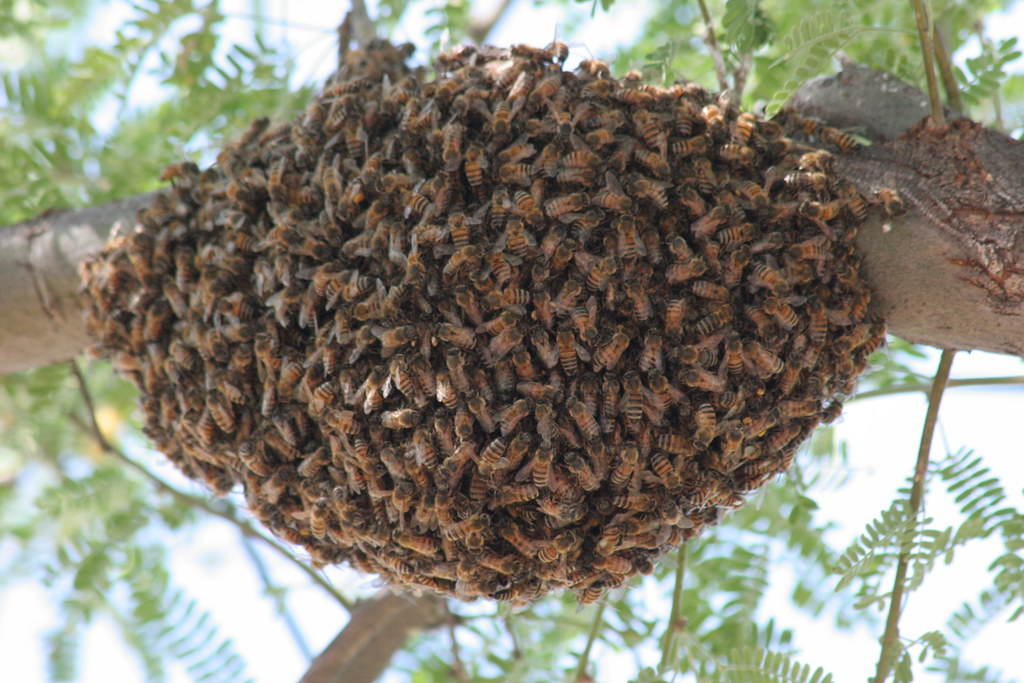 Killer Bee Swarm by pinkgranite, on Flickr